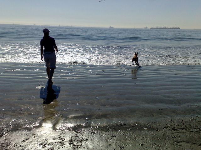 Long Beach Dog Zone